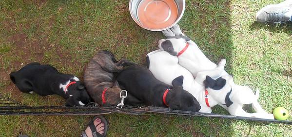 Sleepy pups at Enterprise.