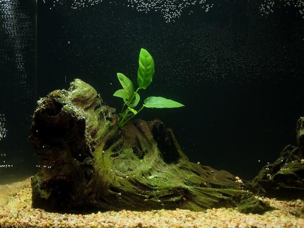new_aquarium-4