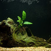 new_aquarium-4