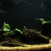 new_aquarium-5