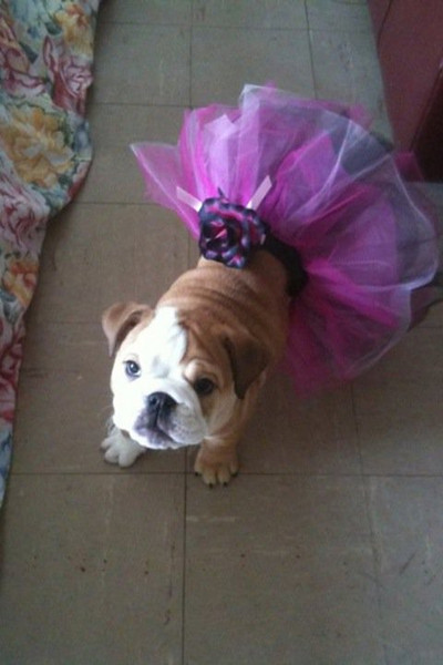 Lola is a true princess.