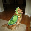 Brody, a rescue dog, loves his turtle costume.
