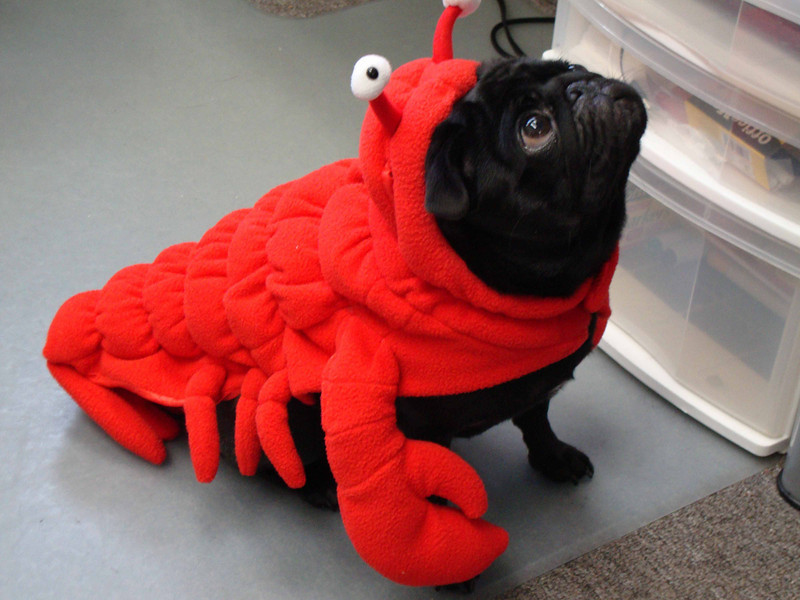 Raisin brings some under-the-sea fun to this year's festivities.