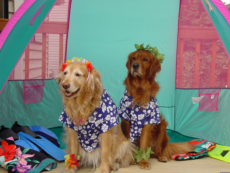 Hannah and Hector are living the island life this Halloween.