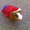 Sebastian is SpiderPig!