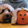 Levi celebrates his first Halloween with his look-a-like pumpkin.