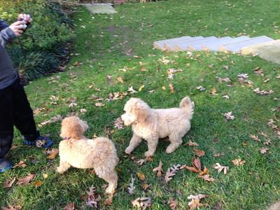 with Roxy,, Ari's sitere