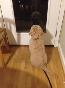 Barking at his reflection