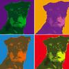 "Warhol Style ""mutt"" Razz"