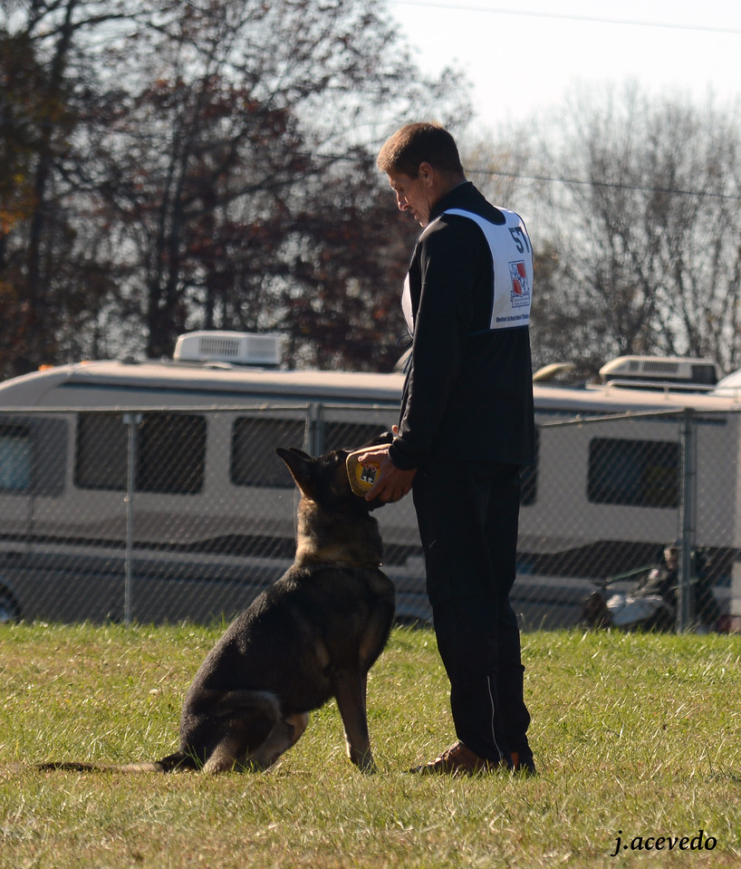 Bill & Athos, retrieve on the flat<br /> 2015 USCA National Championships