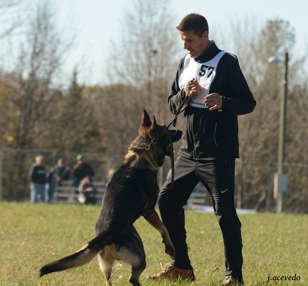 Good boy Athos!<br /> 2015 USCA National Championships