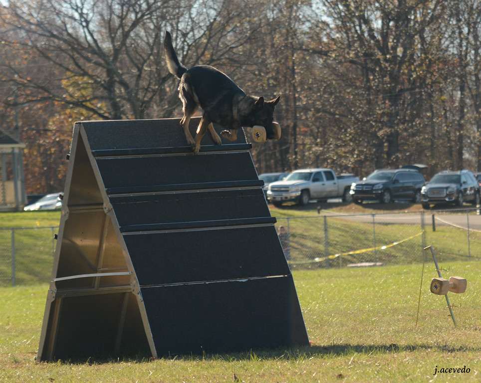 Athos, retrieve over the a-frame<br /> 2015 USCA National Championships