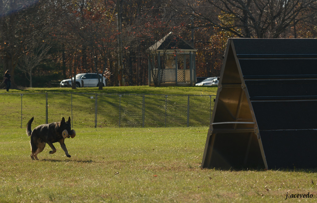 Athos, retrieve over a-frame<br /> 2015 USCA National Championships