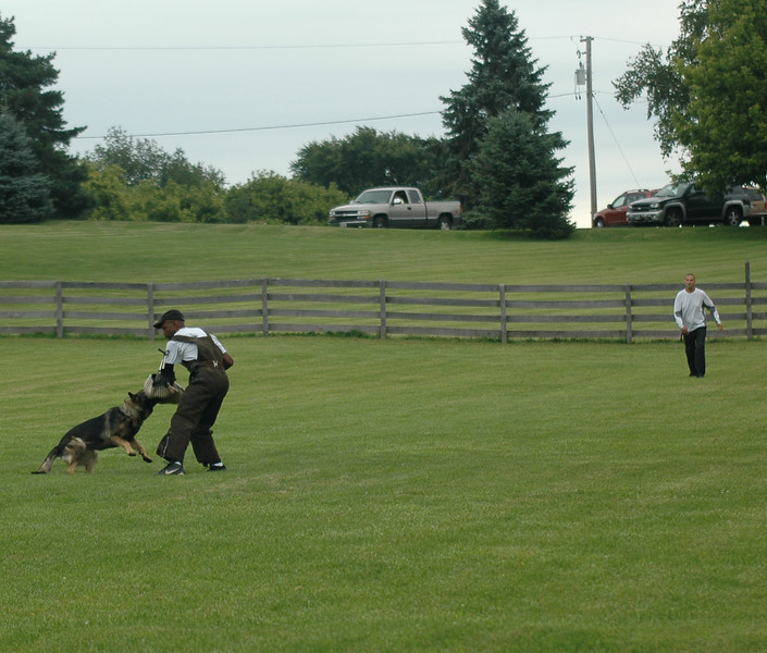 Athos<br /> IPO 1 protection<br /> Indian Creek Schutzhund Club<br /> Helper Kenneth Johnson<br /> <br /> photo by Elad Bachar
