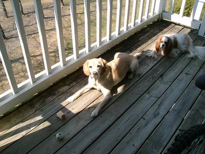 Jasmine and Auburn sunbathing.