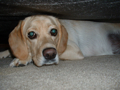 Jasime under the bed.