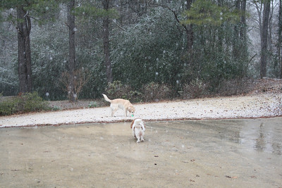Jasmine and Auburn out in the snow flurries - 1.19.08