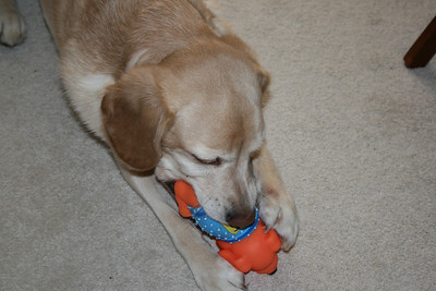 Jasmine playing with her toy - 2008.
