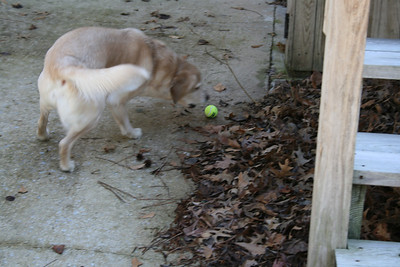 Jasmine getting the ball she pushed of the deck - Mar 2008.