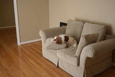 Auburn resting on the sofa - April 2009.