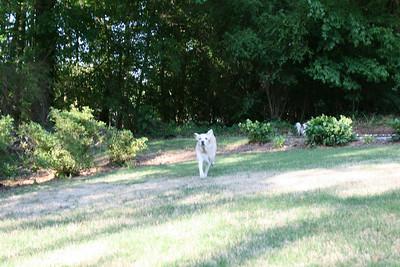 Jasmine running towards me - April.