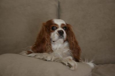 King Auburn of the Sofa!!!