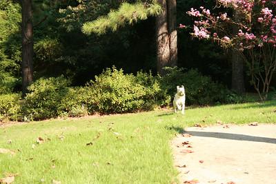Jasmine running - Sept.
