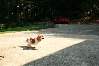 Auburn running for the ball - Sept.