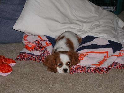 Baby Auburn resting.