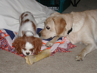 Jasmine sharing her bone with Baby Auburn.