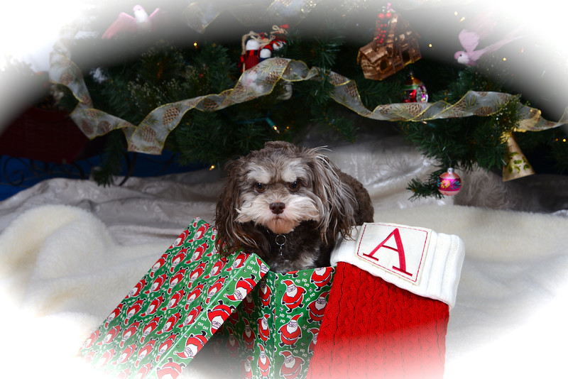 Augie Doggie Christmas
