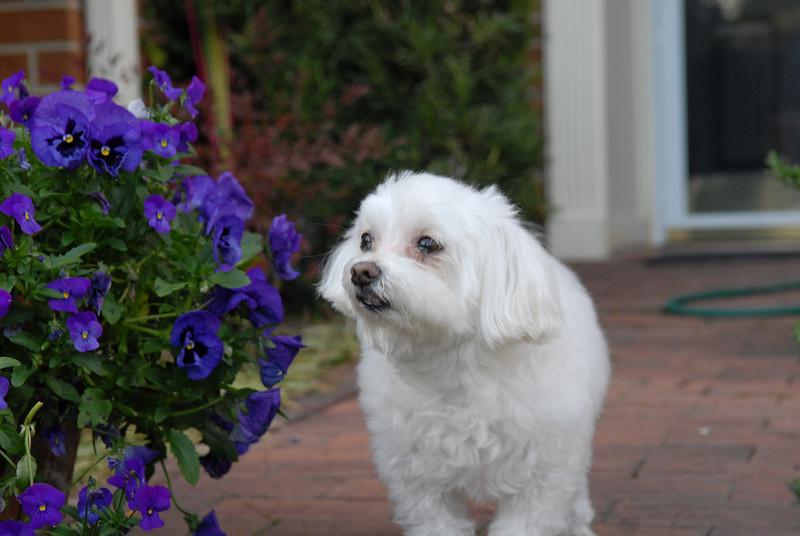 Harley likes flowers.