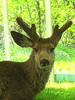 buck 34