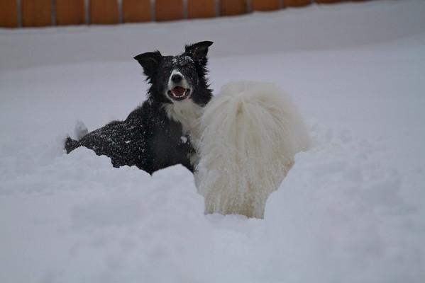 Back Yard Snow - January 20, 2011