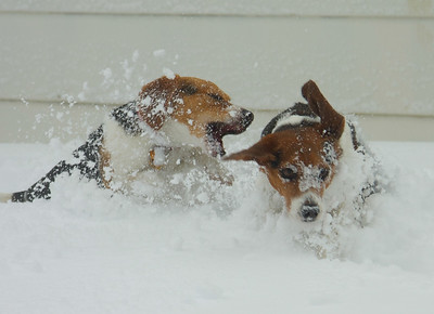 Our Beagles