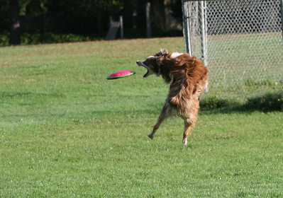 Bandit Catching Frisbee
