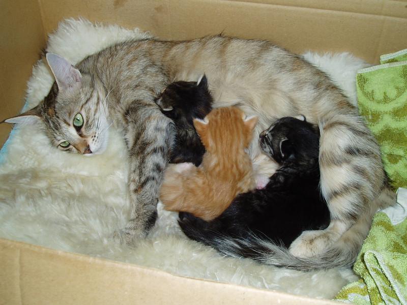 Ildiko and her youngs. Ildiko et ses bébés.