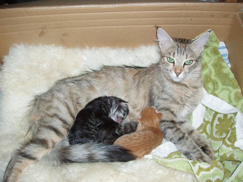 Ildiko and her babies, Dalalven and Dvina