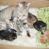 Ildiko, Dammara and the babies.<br /> Ildiko, Dammara et les petits.