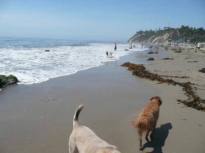 Barley's Second Beach Visit