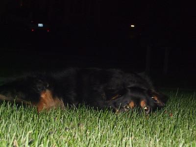 Bear 2004-2008