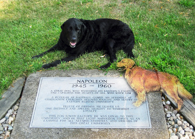 Beau posed at the site of the memorial for Napoleon - the beloved campus dog.