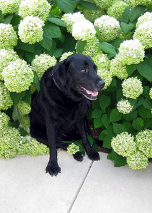 We posed him amongst the flowers on campus - as you can see on his face - it wasn't where he really wanted to sit.