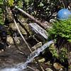 Fresh watering hole