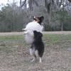 Beech Tree Texas Ranger - Maggie's sire