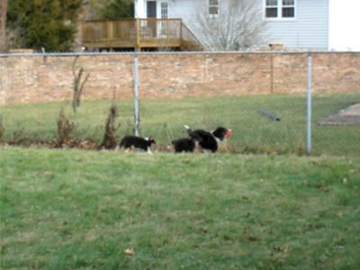 Beechtree Puppies