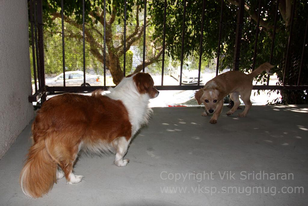 http://www.vksphoto.com/Pets/Ben/i-NJLTbqz/0/XL/IMG_5737-XL.jpg