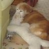 IMG_0314 - 2011-03-07 at 01-46-21