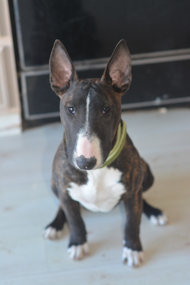 Betsey @ six months<br /> March 2015