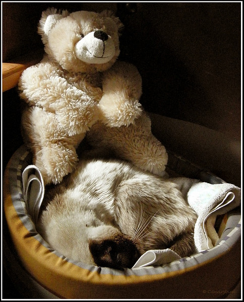 Sleeping with Teddy in her bed.